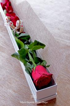 Single Rose Boxed